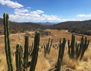 Disegno: Interpreting Mexico's native corn harvest