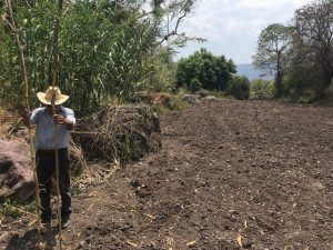 Yale E360: Indigenous Maize- Who Owns the Rights to Mexico's 'Wonder' Plant?